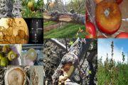 Identificación de microorganismos patógenos de enfermedades en frutales