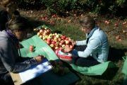 Estrés abiótico en frutales
